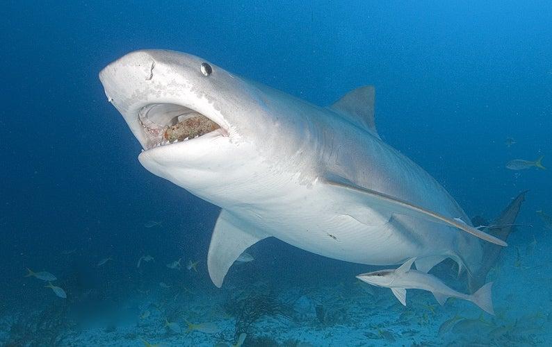 Shark Attacks Let'sGoDigital Reporter as She Reviews Underwater Cameras in the Bahamas