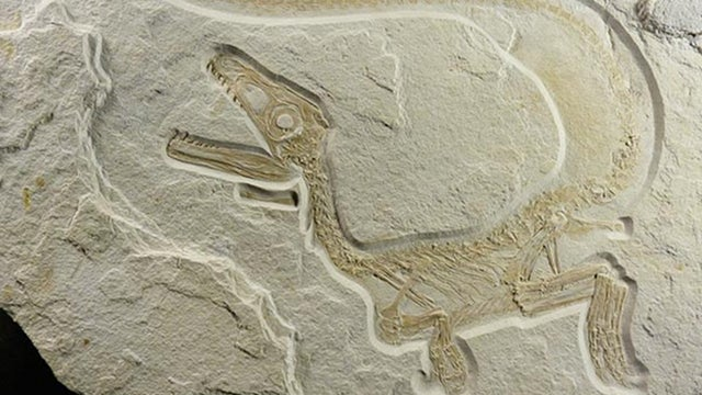 Paleontologists now say all dinosaurs probably had feathers