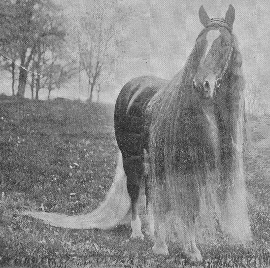 The real-life My Little Ponies were creepy and magnificent beasts