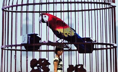 You Say Macau, I Say Macaw