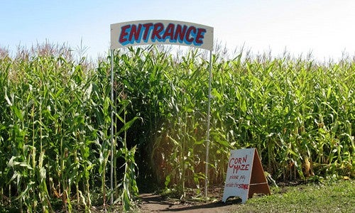 Where Can I Find Corn Mazes, Pumpkin Patches, and Orchards?
