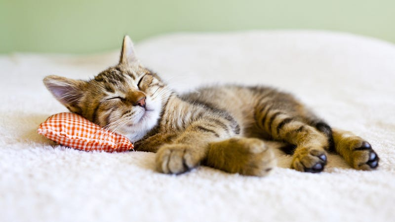 The science behind power naps, and why they're so damn good for you