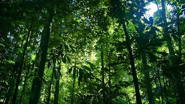 The real reason behind the rainforest's extreme biodiversity