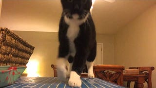 You Won't Believe What This Amazing Cat Does! (YOU WON'T!)