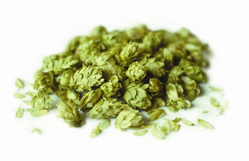 Drinking Experimental Hops in the Sixpoint Beer of the Future