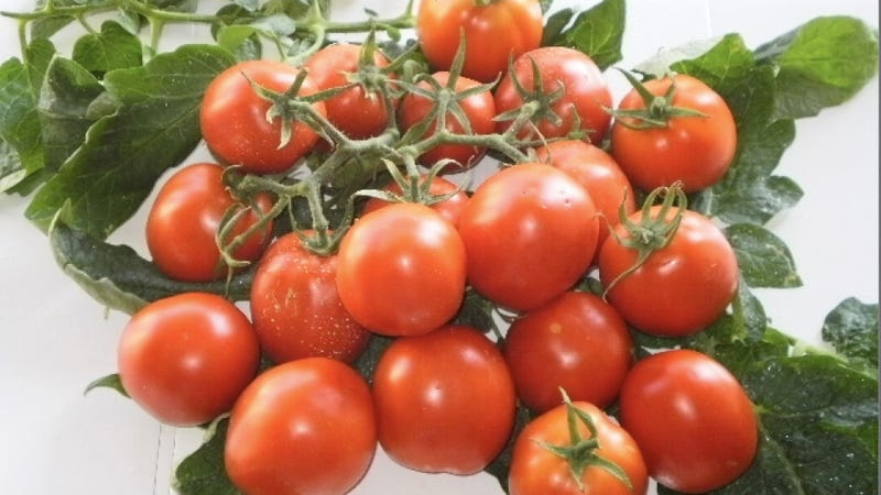 How Tomatoes Could Curb Cancer in Italy