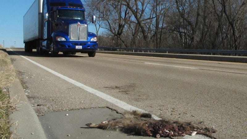 The People Of Michigan Could Soon Legally Be Able To Eat Roadkill