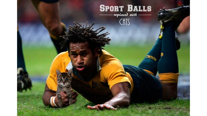Here Are Some Sport Balls Replaced With Cats
