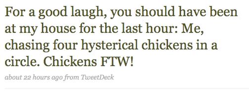 The Tragic Tale of Susan Orlean's Chicken