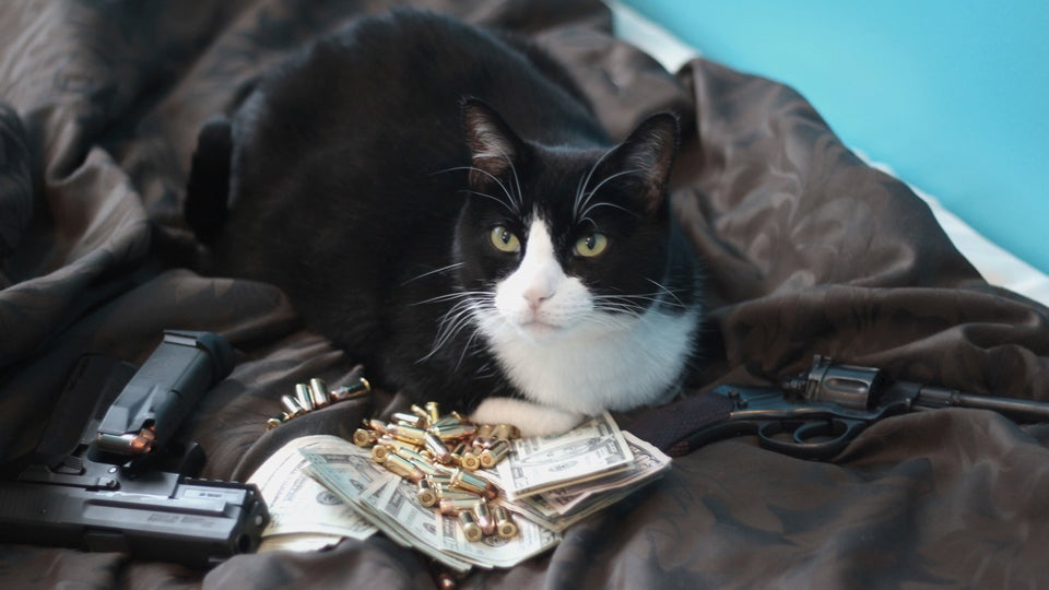 Cats Money Cats With Guns And Money