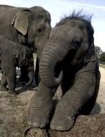 Horton Hears A Poo
