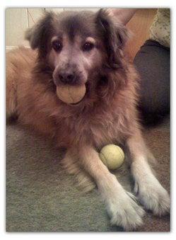 In Memory Of My Dog Virginia