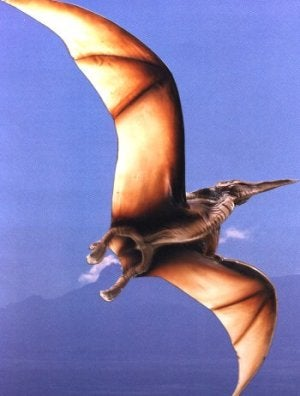 Were Pterodactyls Too Heavy to Fly?