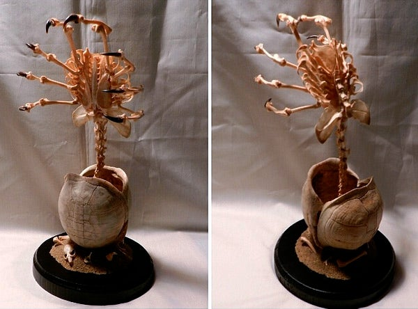 Behold an Alien facehugger made entirely out of animal bones