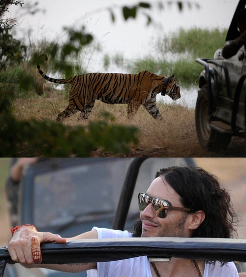 Photogs Covering Perry-Brand Wedding Fend Off Bodyguards & Tigers!