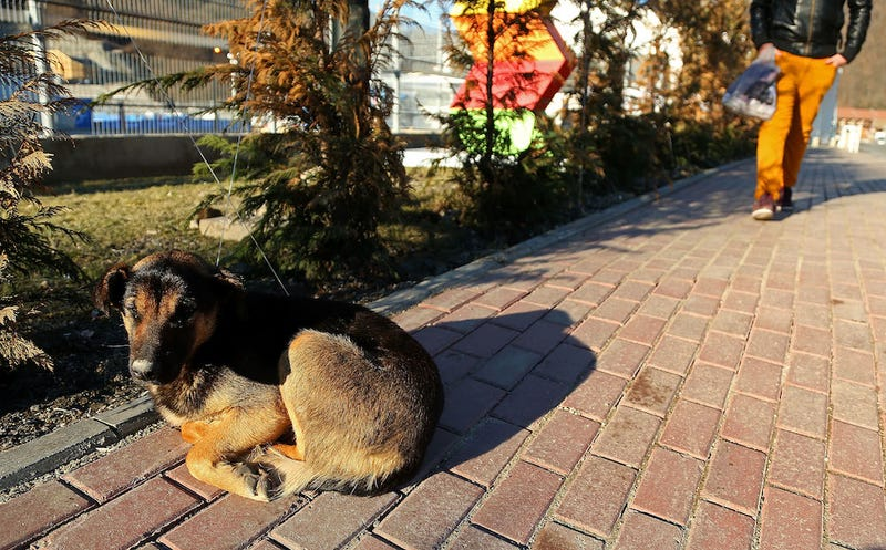 The Dogs Of Sochi