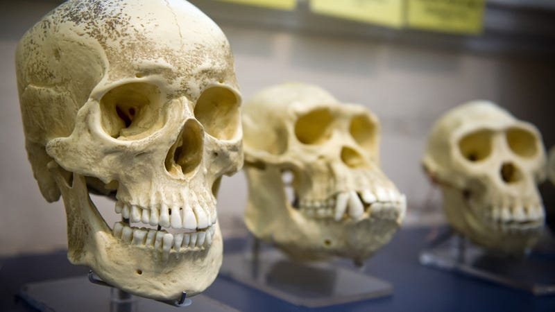 "Missouri schools may have to ""alert"" parents when evolution is taught"