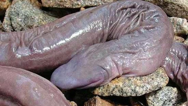 What a penis looks like
