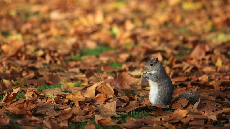 The Fascinating Story of Why U.S. Parks Are Full of Squirrels