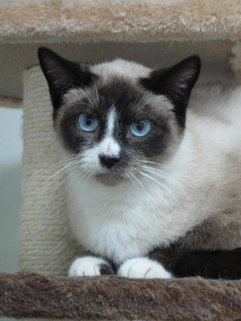 OMG Grumpy Cat's Doppelgänger Is Up for Adoption