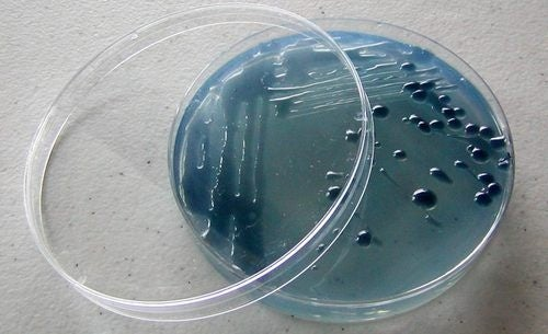 Petri Dish Soap Cleanses E. coli With E. coli