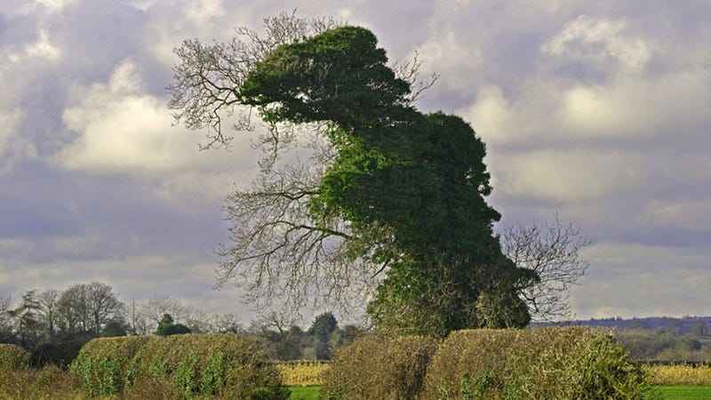 Photographer Finds Standing 35-Foot-Tall Tree-Rex In England