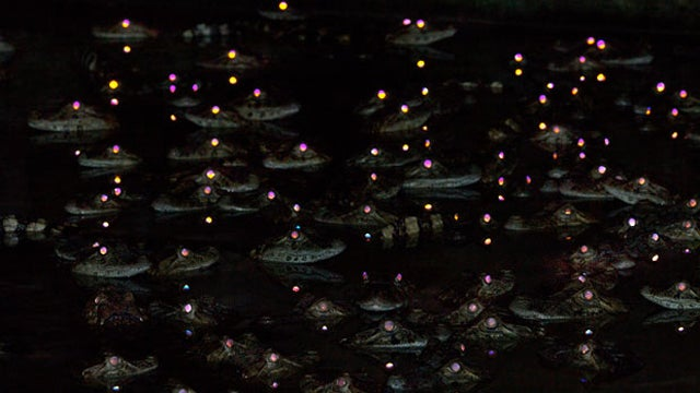 Why Do Crocodiles Eyes Shine So Beautifully at Night?