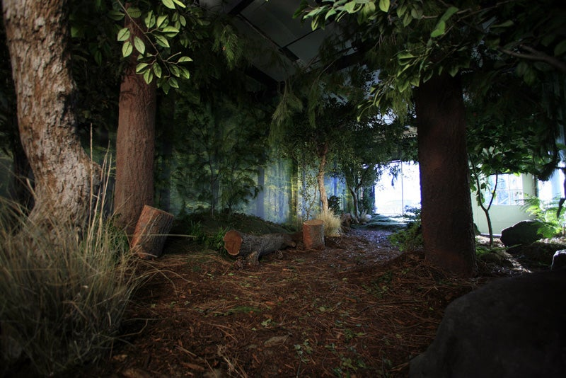 Indoor Forests Are Eco-Chic Home Accessories for a Deforested World