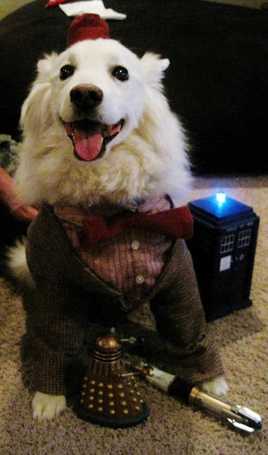 The Doctor is a dog now. Dogs are cool.