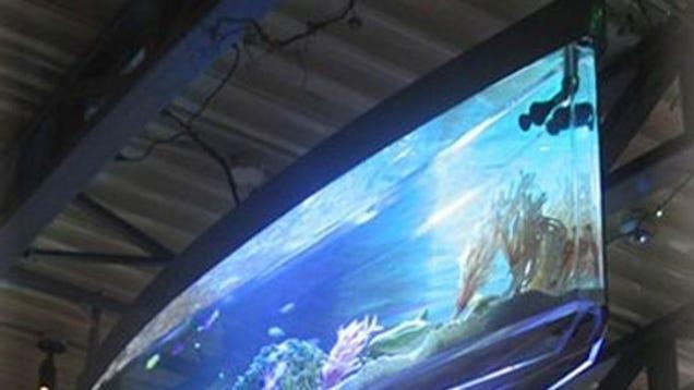 Spacearium news videos reviews and gossip gizmodo for Spacearium aquariums