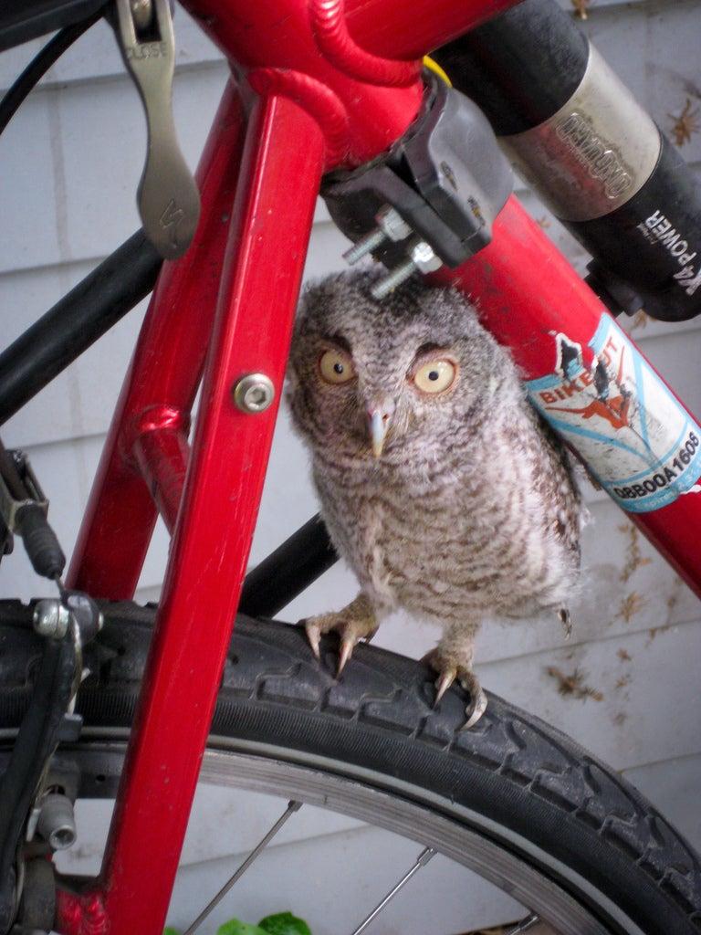 Owl on bike gallery