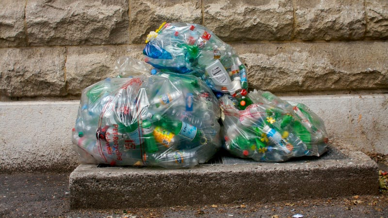 Scientists Have Discovered a Bacteria That's Evolved to Eat Plastic