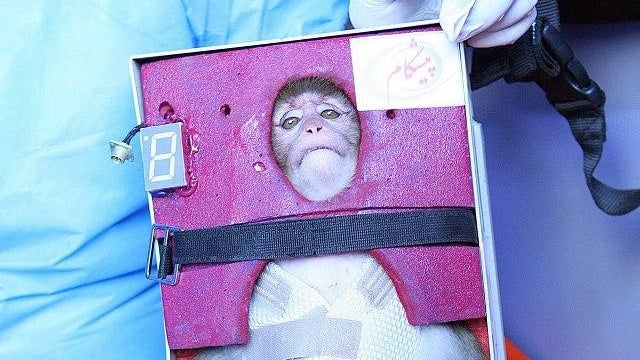 One Small Step for a Sad Monkey: The Iranians Say They Shot This Monkey Into Space Today