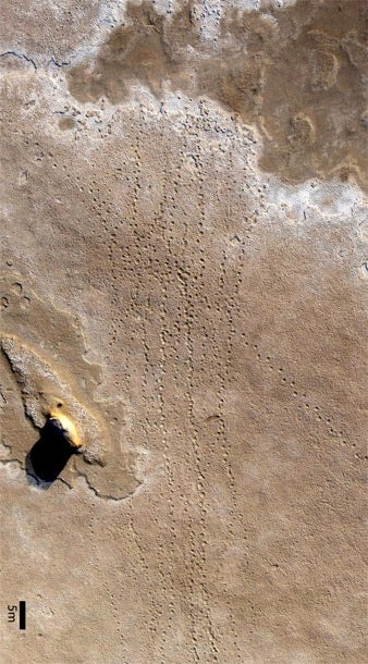 Scientists discover vast field of footprints from 8-million-year-old elephant herd