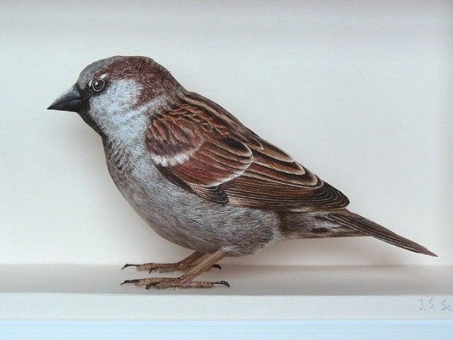 This is not a finch
