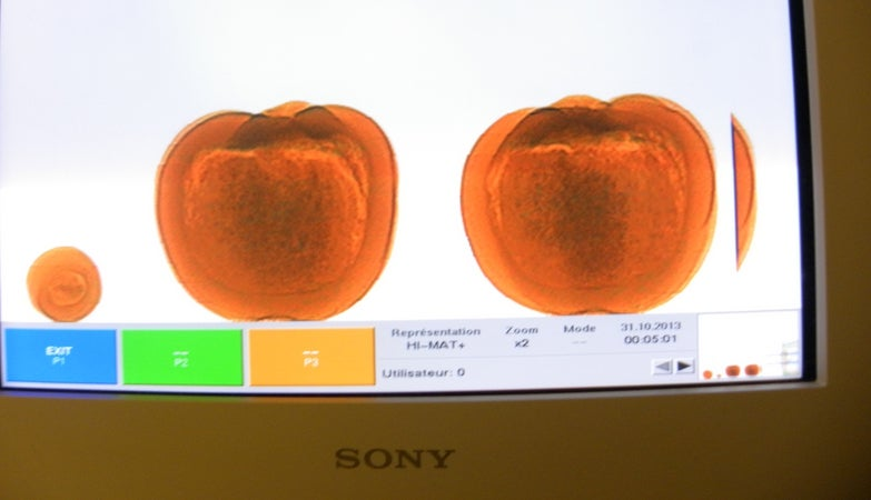 Woman Busted by Airport Security with Cocaine-Stuffed Pumpkins
