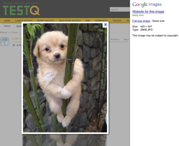Google Image Search Updates with a Cleaner Look and Improved Functionality