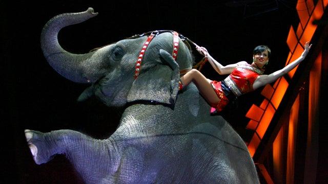 OC Fair Bans Elephant Rides; Mustache Rides Still Free