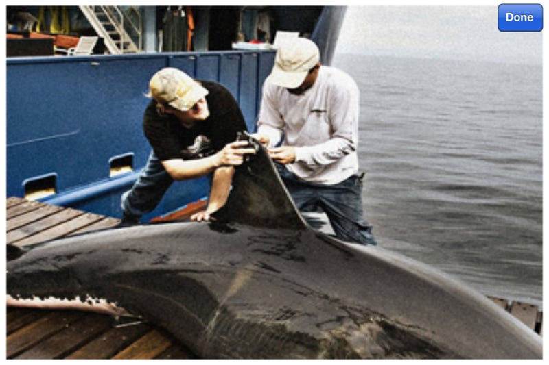 Expedition White Shark Gallery