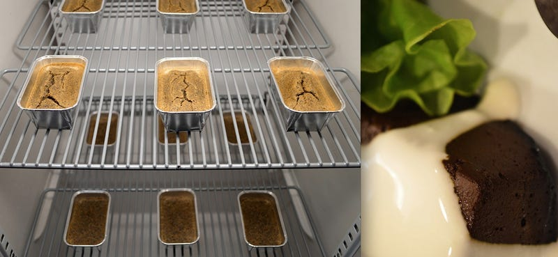 This Insect Farm Grows Fly Larvae For Your Dinner