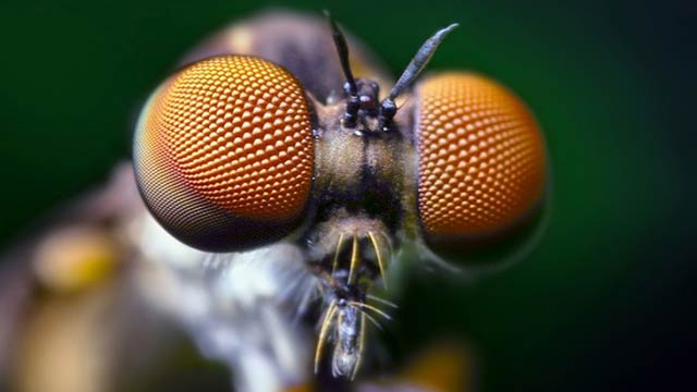 Pentagon Wants to Cover Its Drones With Insects' Tiny Hairs