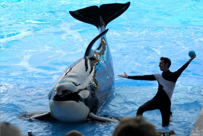 PETA Files Whale Slavery Lawsuit Against SeaWorld