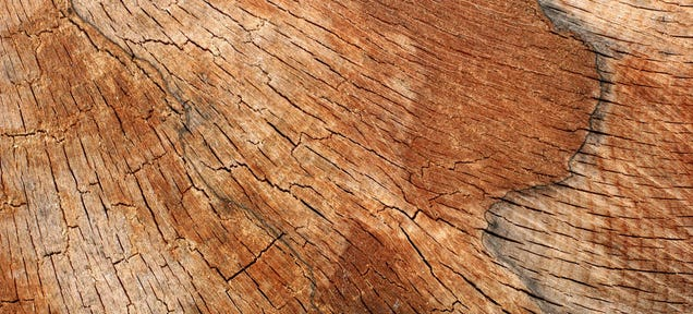 The Difference Between Hard and Soft Wood Has Zero to Do With Hardness