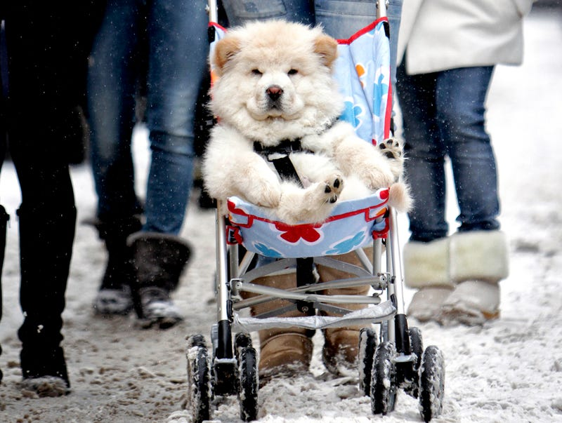 Dog, Sledding
