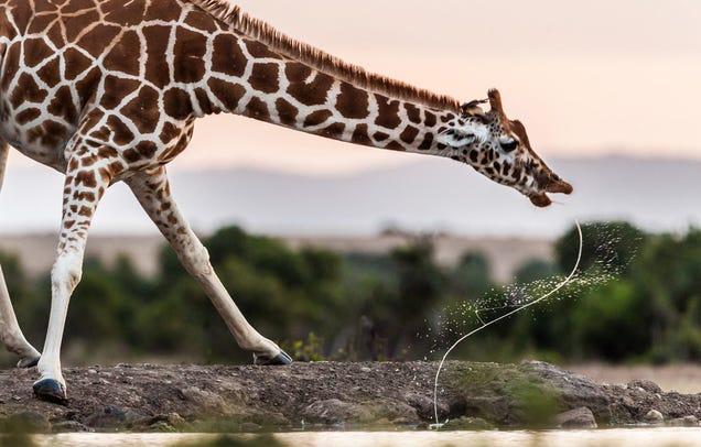 A fotografia de natureza mais inspirador do ano