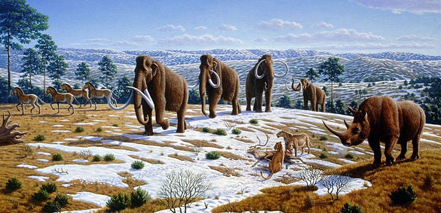 How Do You Kill 86 Mammoths? With Dogs.