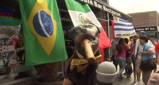 Triumph the Insult Comic Dog Watches the World Cup
