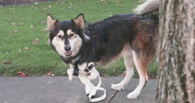 Derby, the Adorable Cybernetic Dog, Just Got Upgraded 3D-Printed Legs