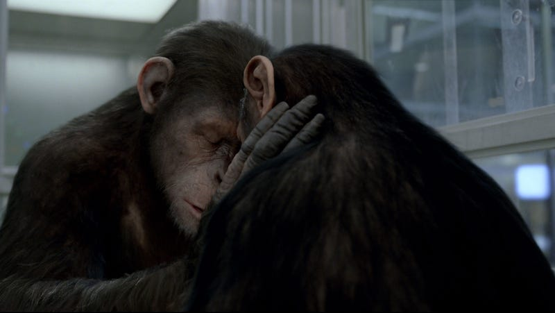 Rise of the Planet of the Apes Gallery