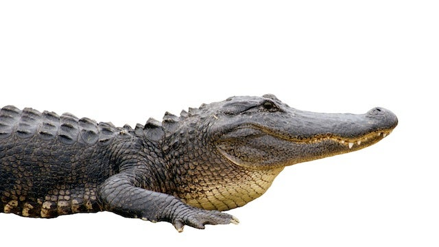 Police Accidentally Gun Down a Fake Alligator That Was Scaring Kids